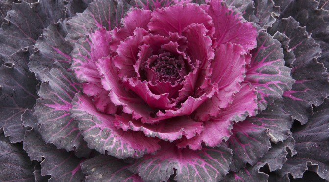 Fresh Cabbage Recipes