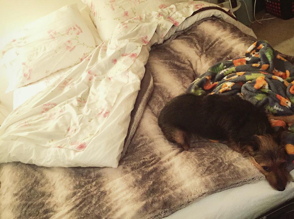 A Cozy Bed