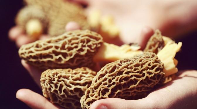 Foraging for Morel Mushroom Recipes