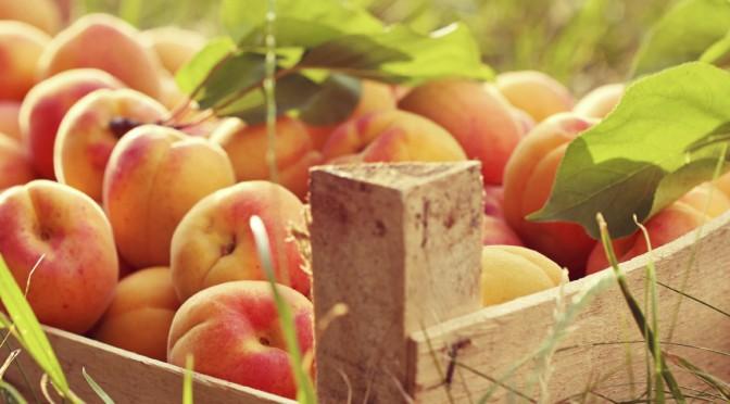 Healthy Apricot Recipes