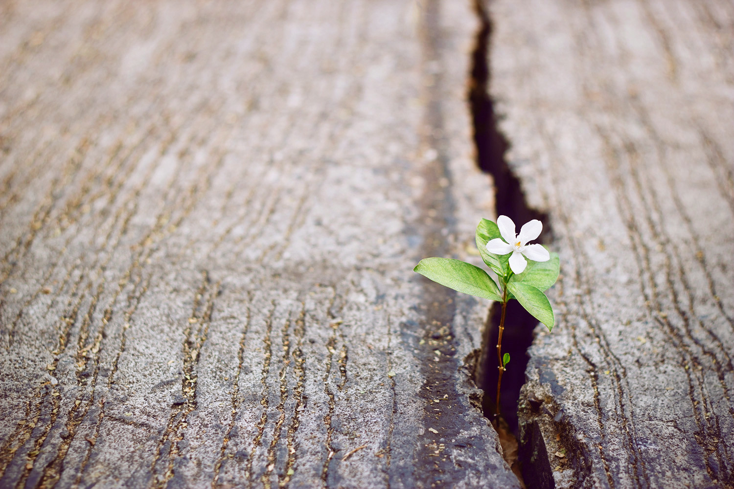 Positive Thinking Grows