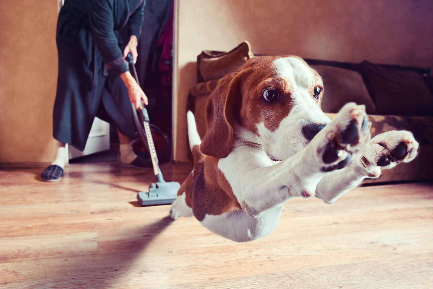 Cleaning and Your Pets