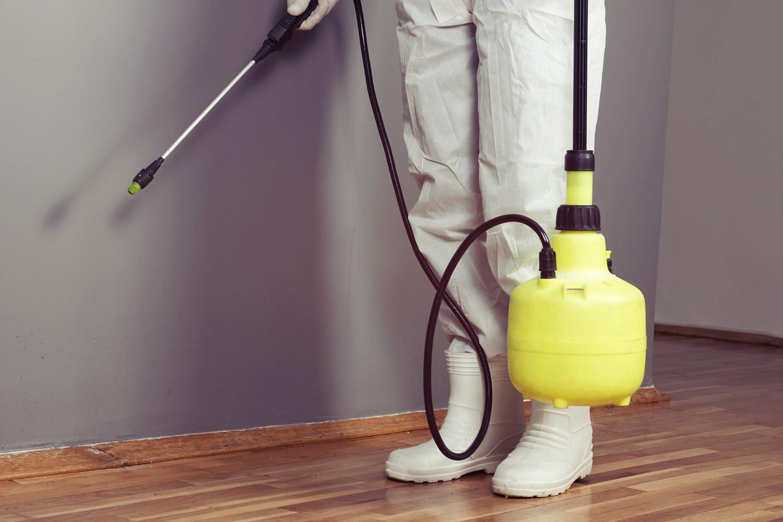 Preventing Bedbugs