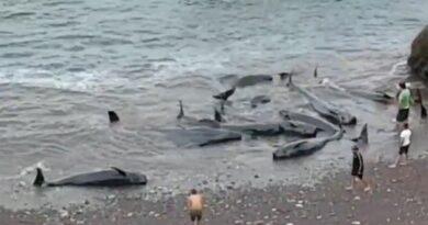Mueren nueve de las quince ballenas varadas en Asturias la