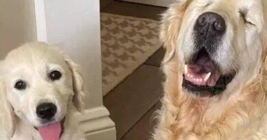 la historia del perro ciego que cuenta con la ayuda de un cachorro que le sirve como guia