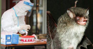 Virus capaz de contaminar células humanas y muy similar al Covid-19 fue descubierto en murciélagos