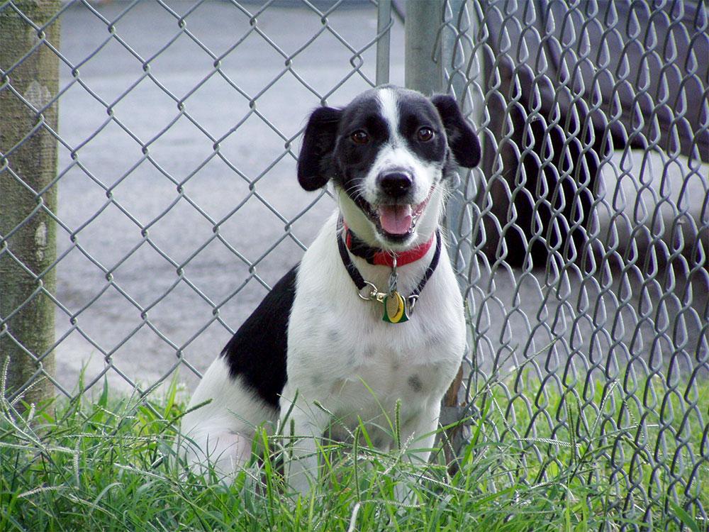 """Carpe Canem"": Where to get that perfect dog"