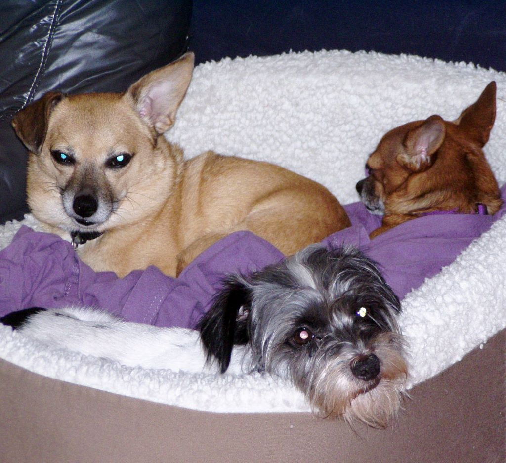 pooch-professor-dogs
