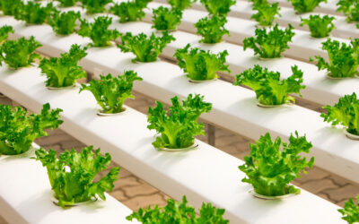 Which Hydroponic System is Right for You?