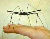 Arachnid Aliens