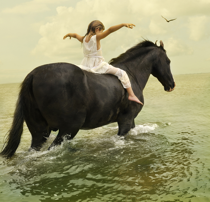 Marwari Stallion-1 | Tom Chambers
