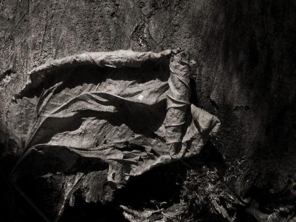 Feuille sur souche | Daniel Heikalo