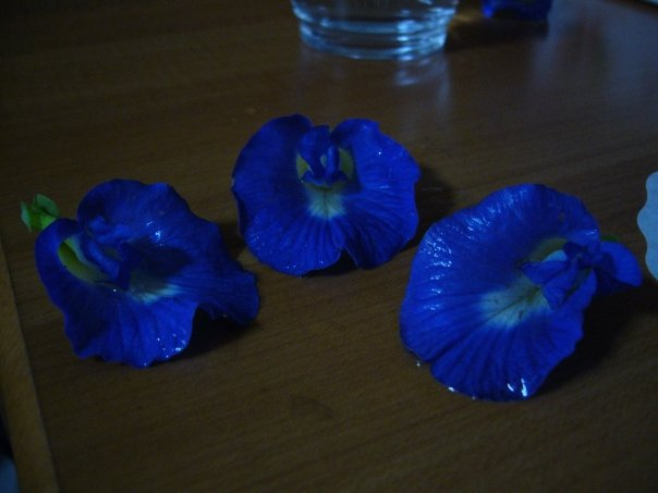 ... versus real plants and culture. These butterfly pea flowers (bunga terlang) are commonly used as a natural food dye in kueh salat/pulut serikaya and dumplings