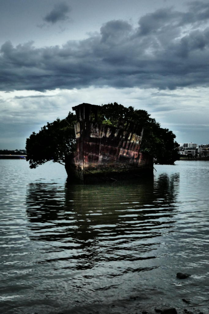 SS Ayrfield Floating Forest