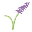 lavender_icon