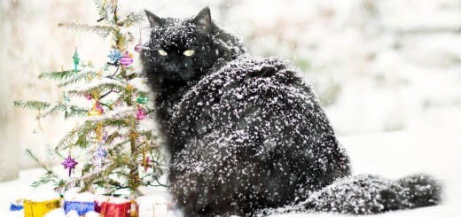 cat dandruff pictures