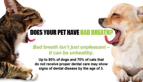 get rid of dog bad breath