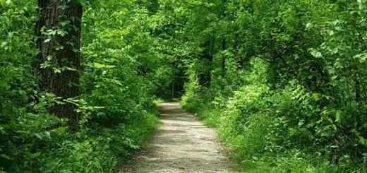 blendon woods trail -- achieving millennial