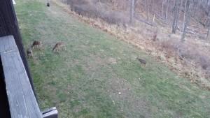 Tame Deer -- Achieving Millennial