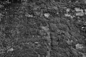 moss on rock at salt fork -- achieving millennial