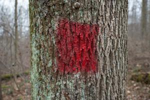 red tree blaze -- achieving millennial