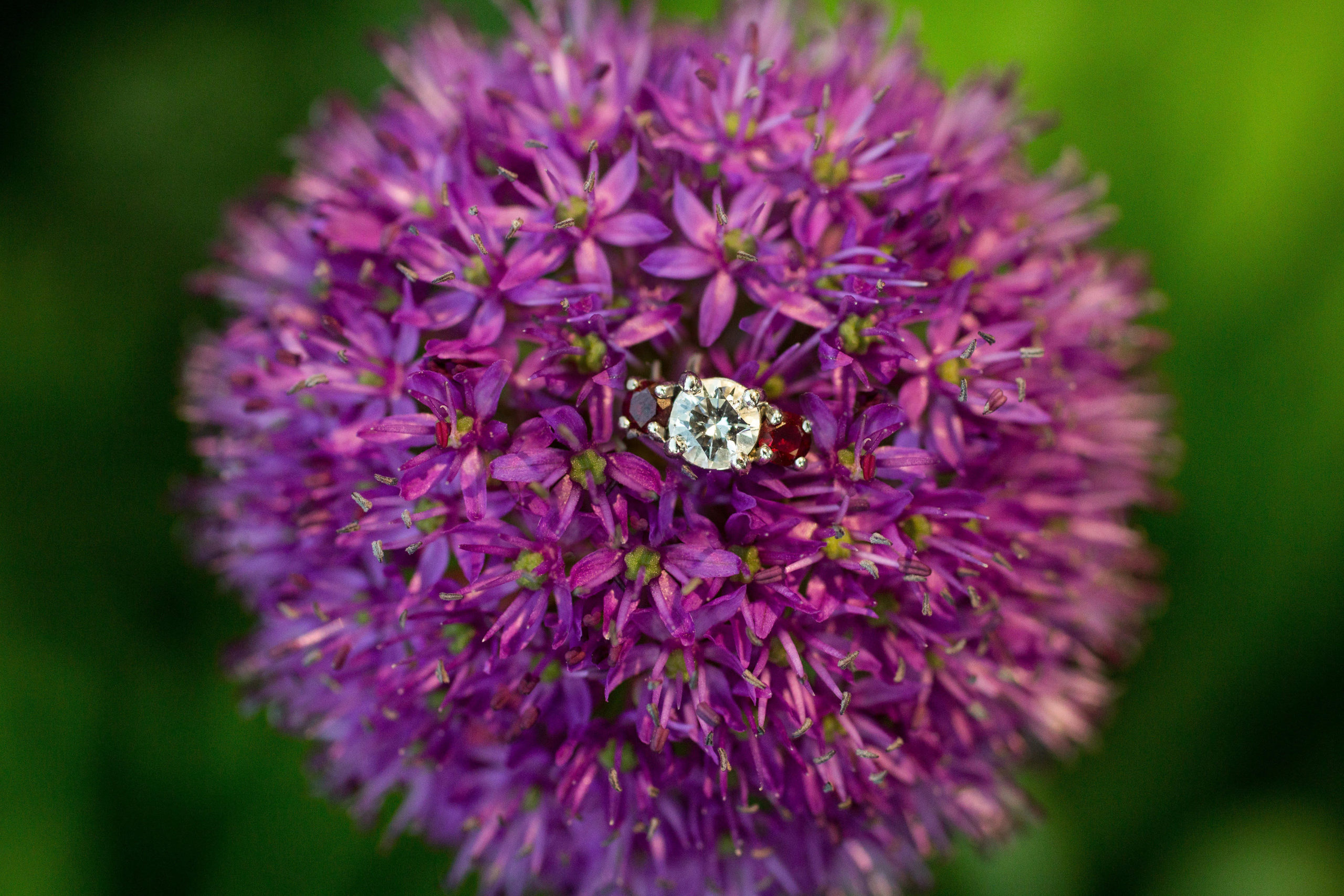 Engagement ring in a purple flower; photo by Pearly Kate Photography