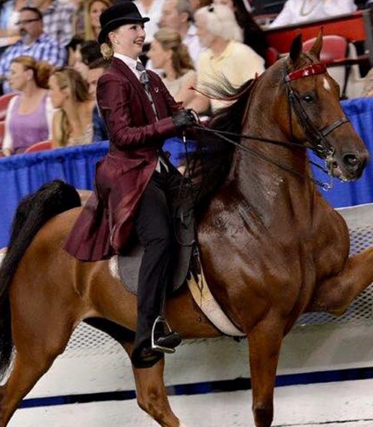Taylor Woods at the World Championship Horse Show in Louisville KY.