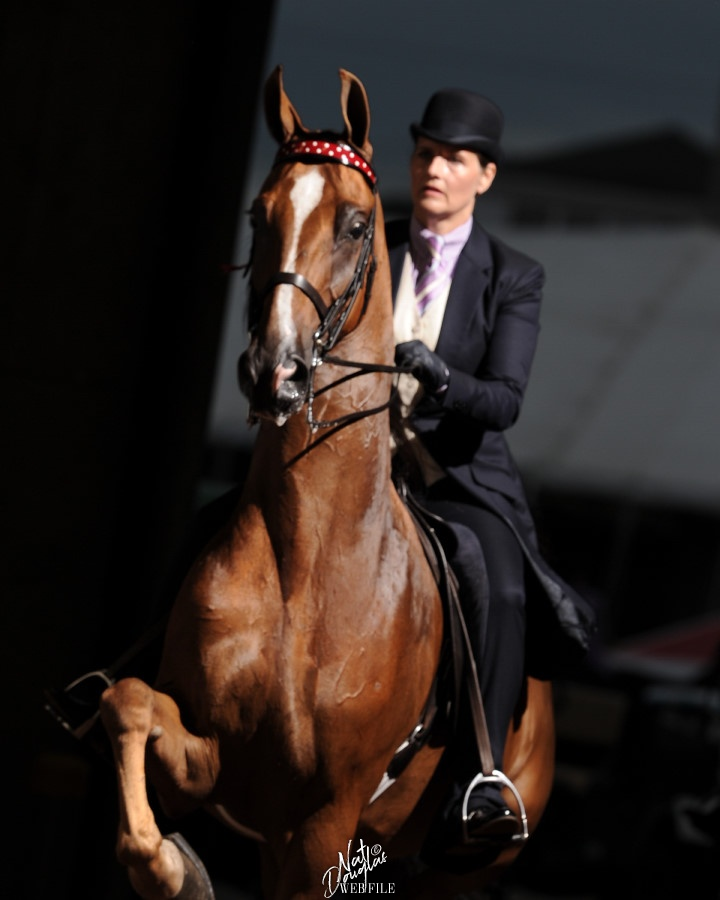 """Sarah Track riding """"Designed by Fancy"""""""