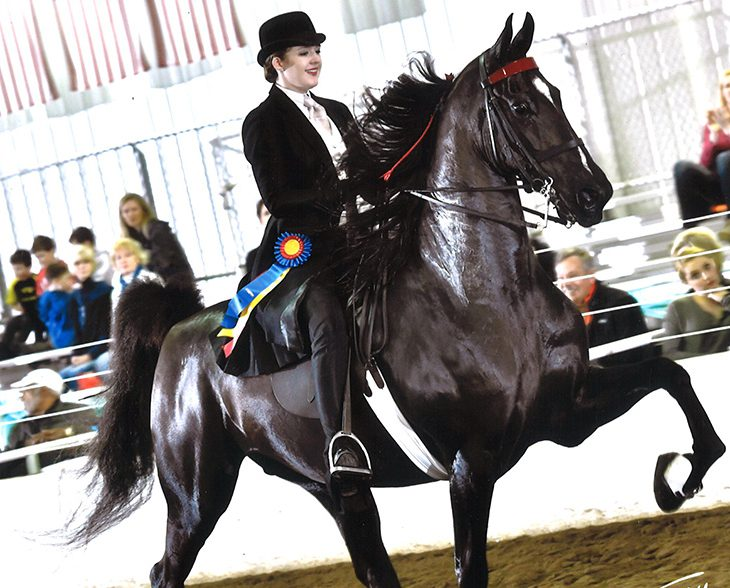 WWU equestrian student showing an American Saddlebred