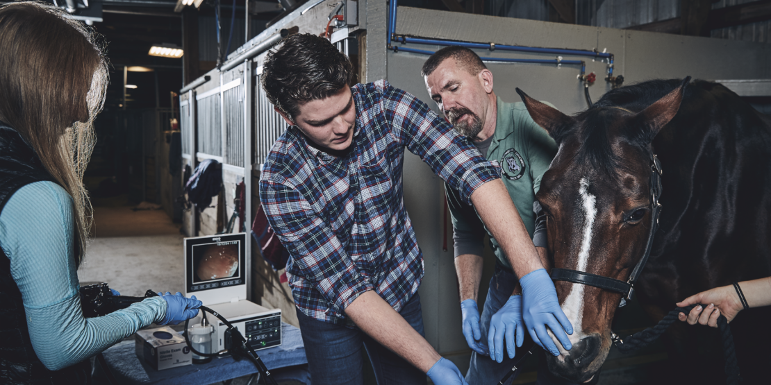 Center for Equine Medicine