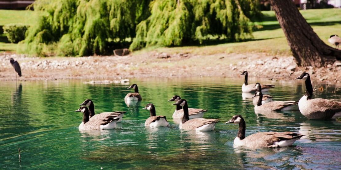 Senior Lake