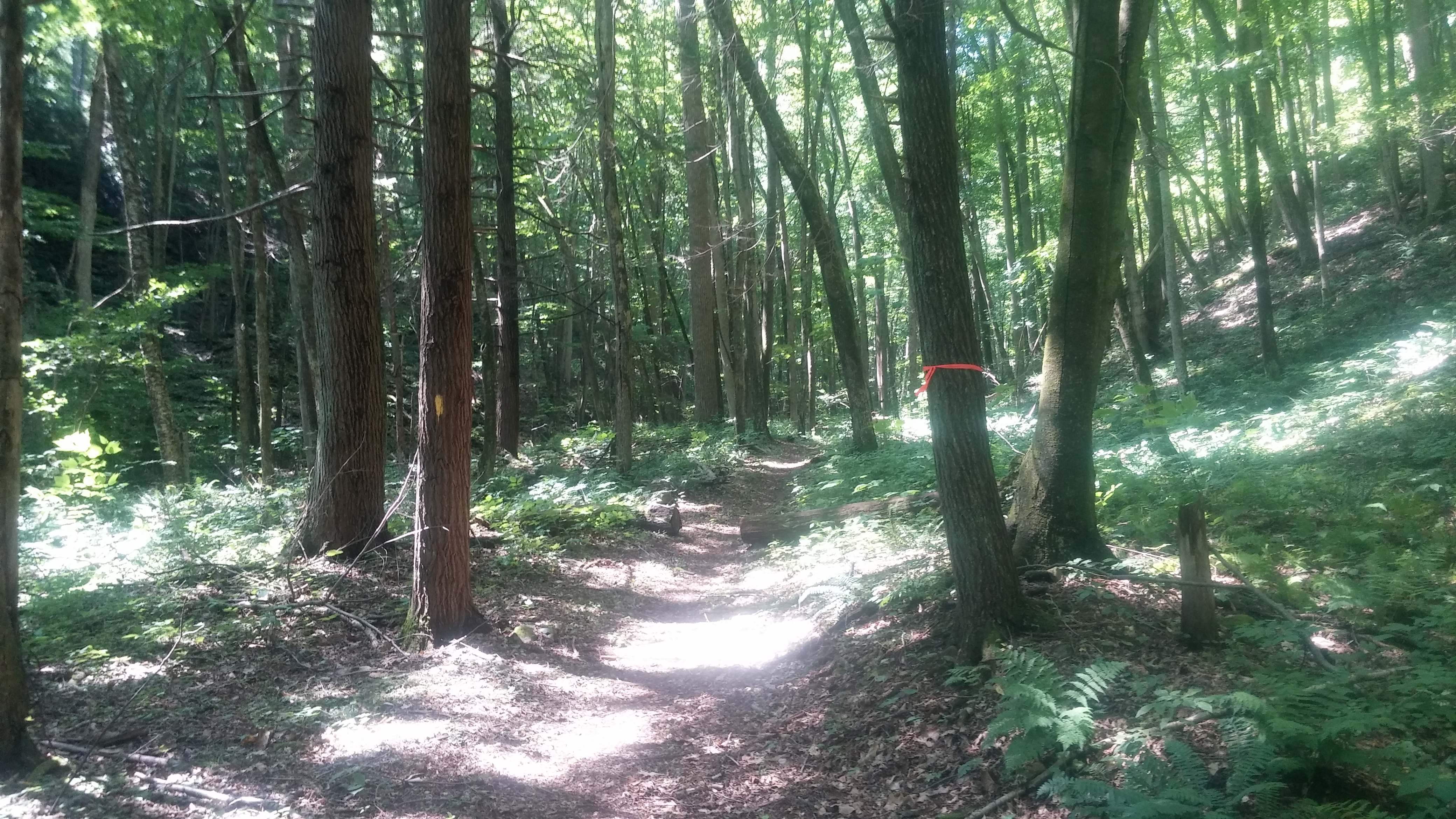 One of the less technical sections of trail.
