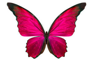 Hot Pink Butterfly