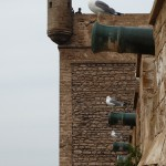 Essaouira ramparts, now guarded by gulls