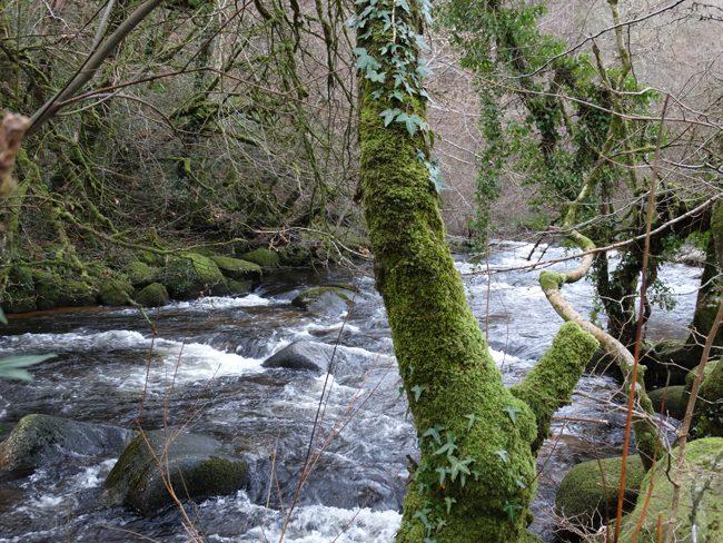 Badger's Holt, Dartmeet, Dartmoor NP