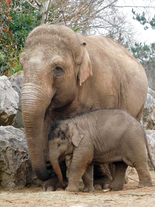 The Hi-Way Family - Chester Zoo's Elephants