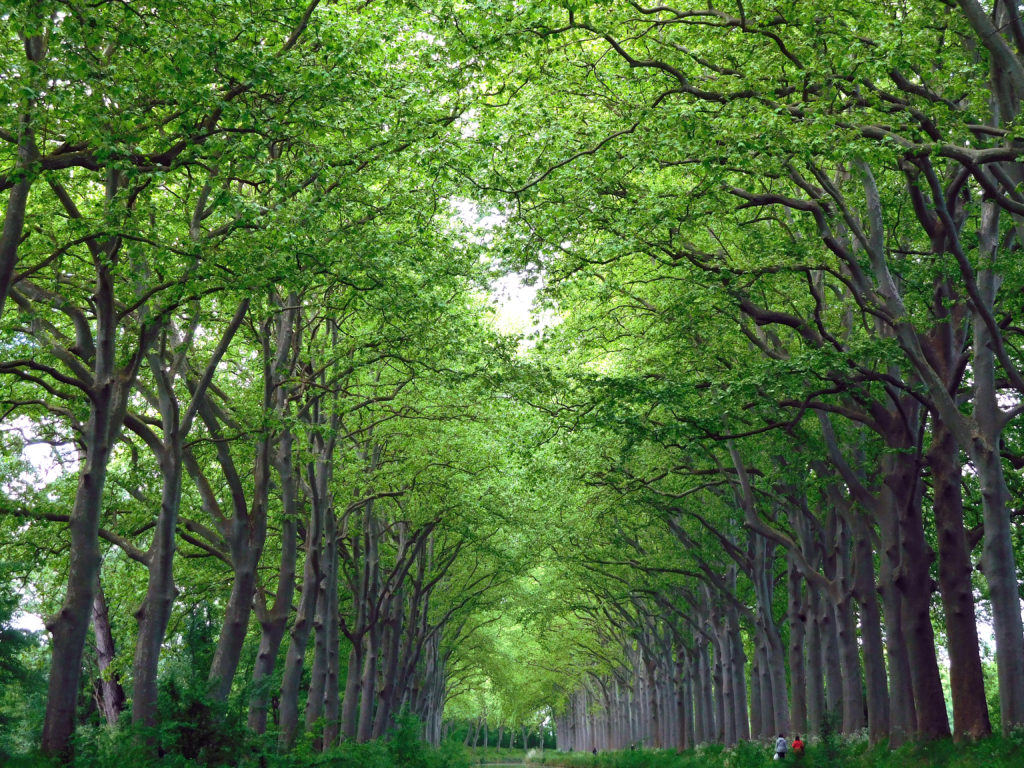 Absolute serenity  as we glide under the shady plane trees.