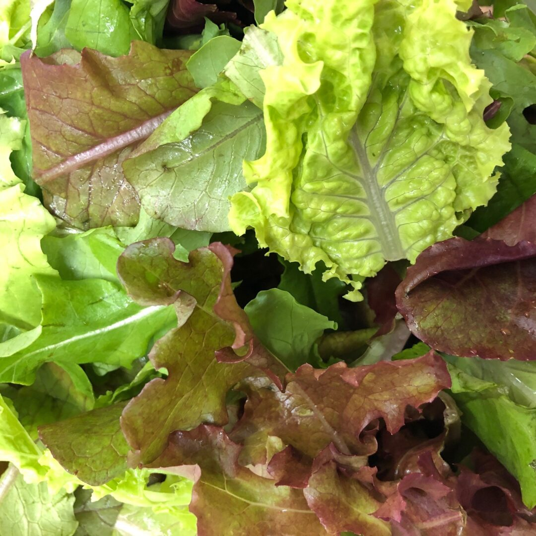 a variety of lettuce