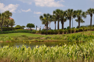 palm trees line the sky in front of a pond with blooming yellow canna lilies at its banks at Jacksonville beach
