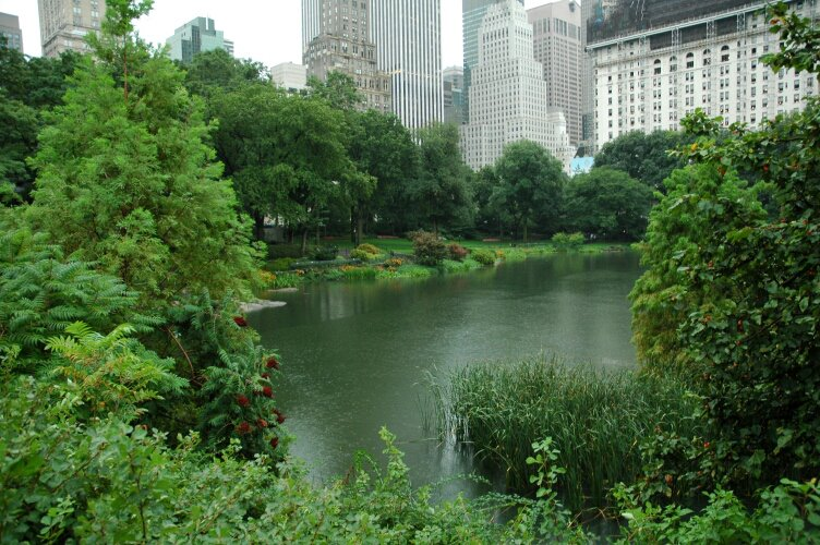 New york Central park view in the rain