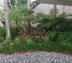Tropical plant selections protected by all building from cold winter temperatures and frost