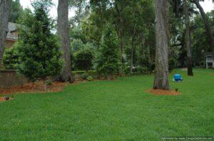 Landscape Jacksonvile Florida