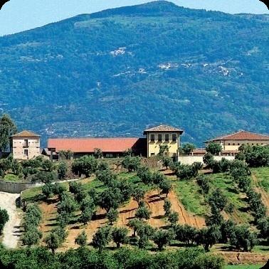 Ферма-винодельня Statti