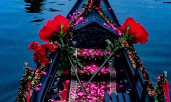 Scattered Rose Petals   Black Swan Gondola