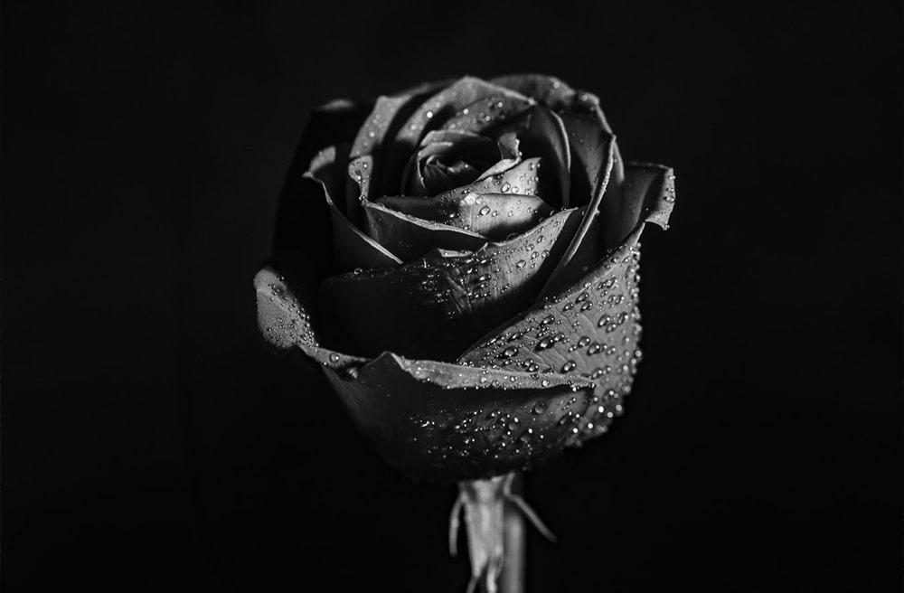 Black Rose | A VIP Experience from Black Swan Gondola