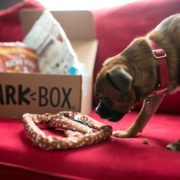 BarkBox for Your Furbaby!