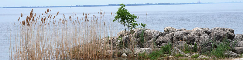 Maumee Bay State Park