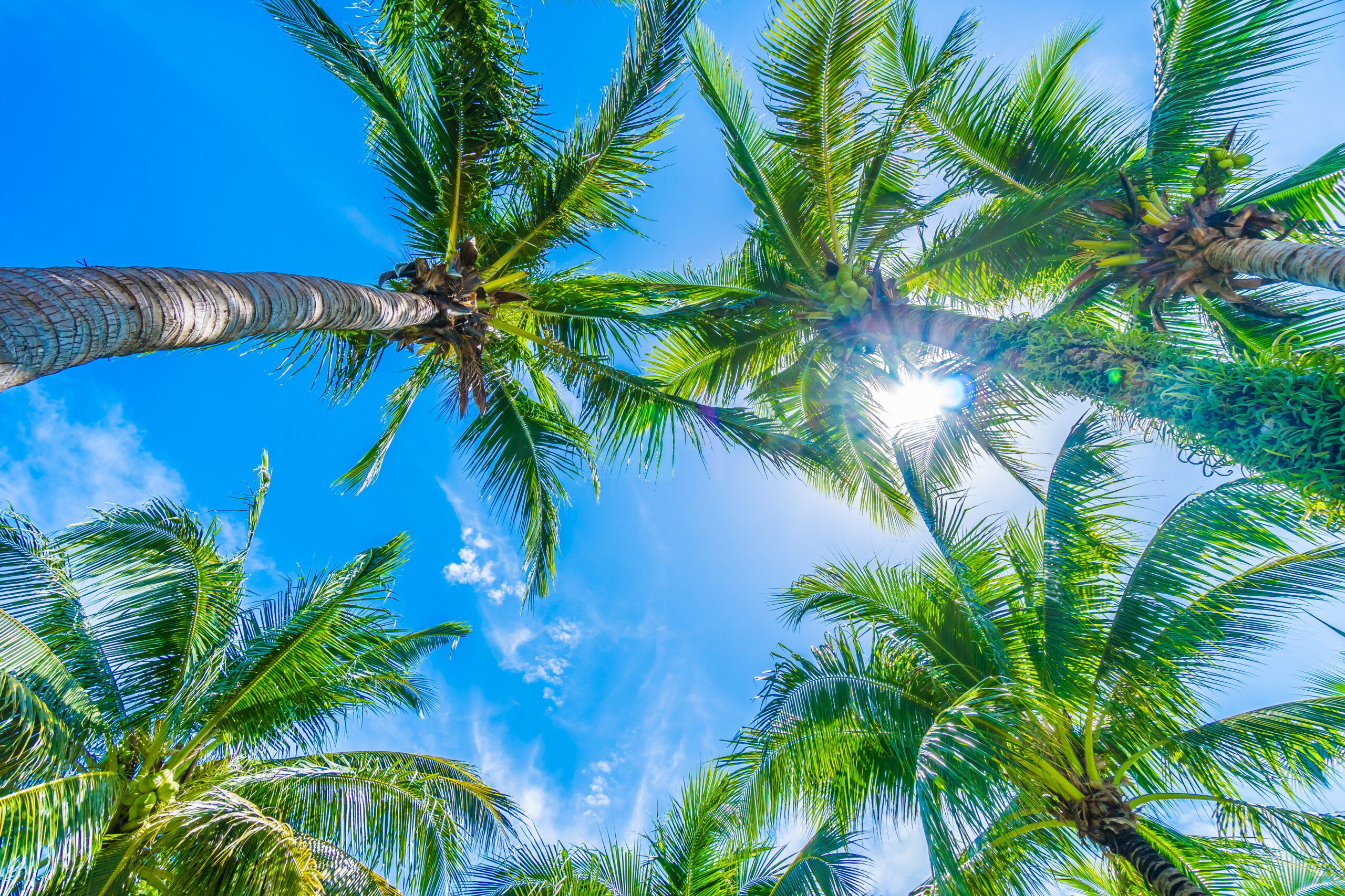 Miami Florida insurance programs
