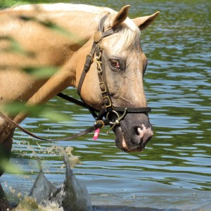 School Horse-Simon Says
