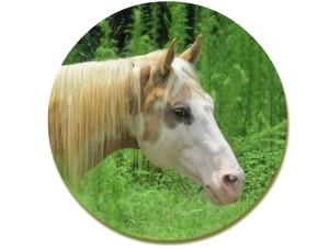 School Horse-Dream Catcher